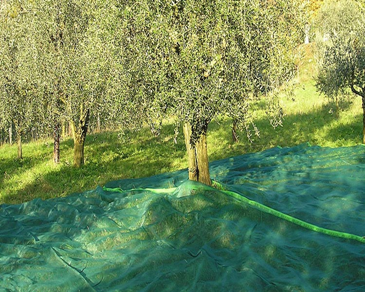 New HDPE Harvest Collect Olive Net with UV (YHZ-HON02)